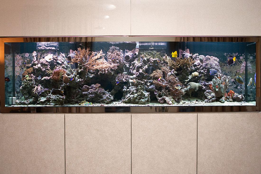 Geschäftsführerbüro Aquarium