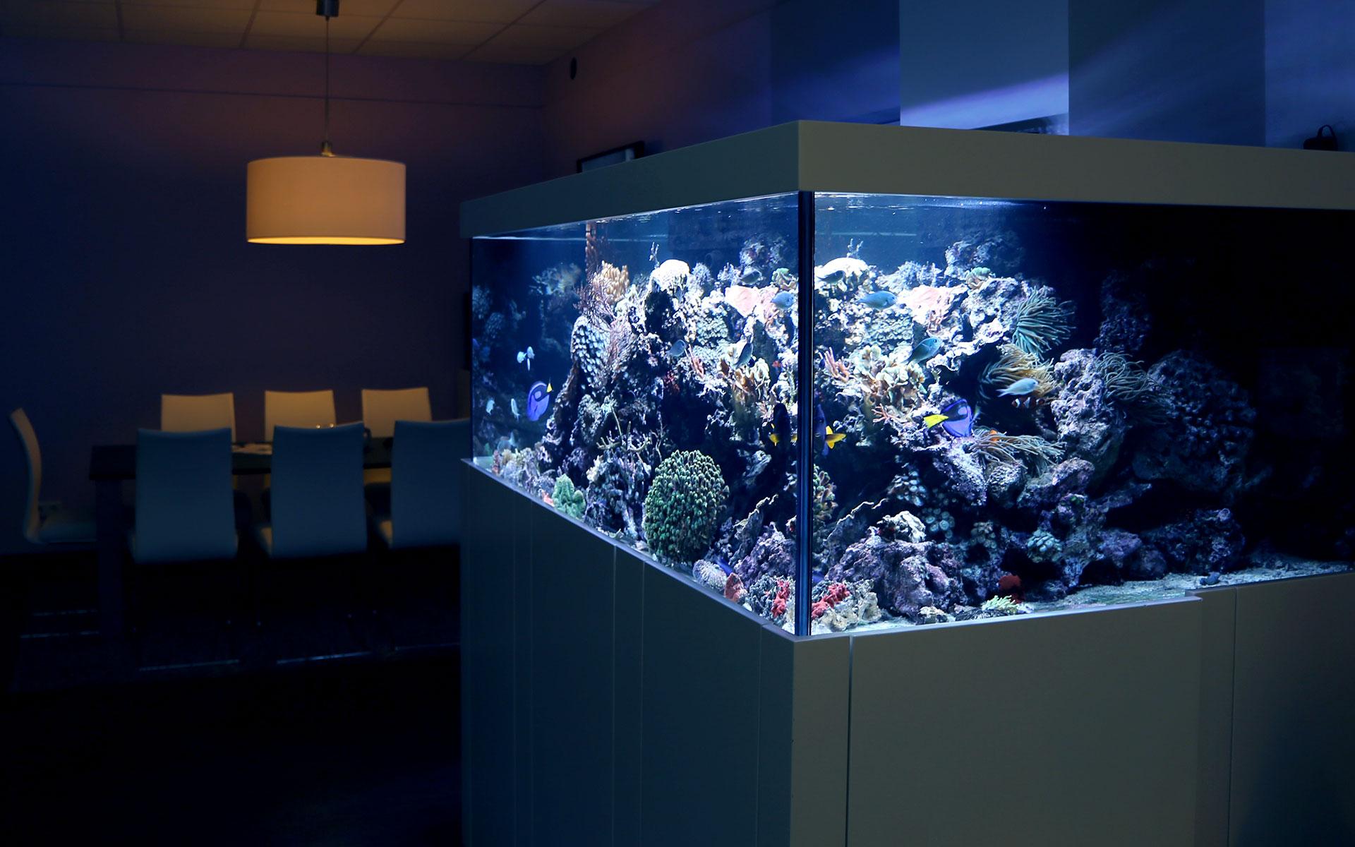Designmöbel von Aquarium West