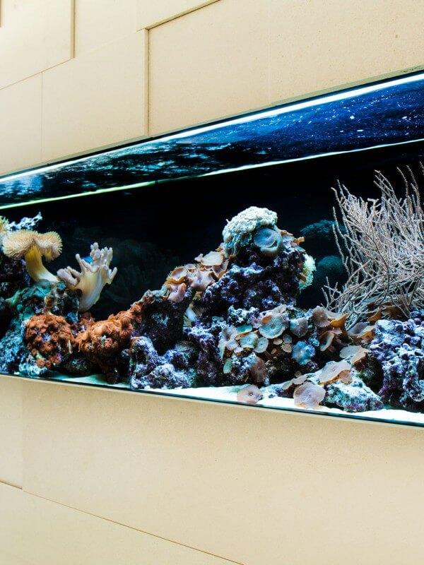 Aquariumbau München