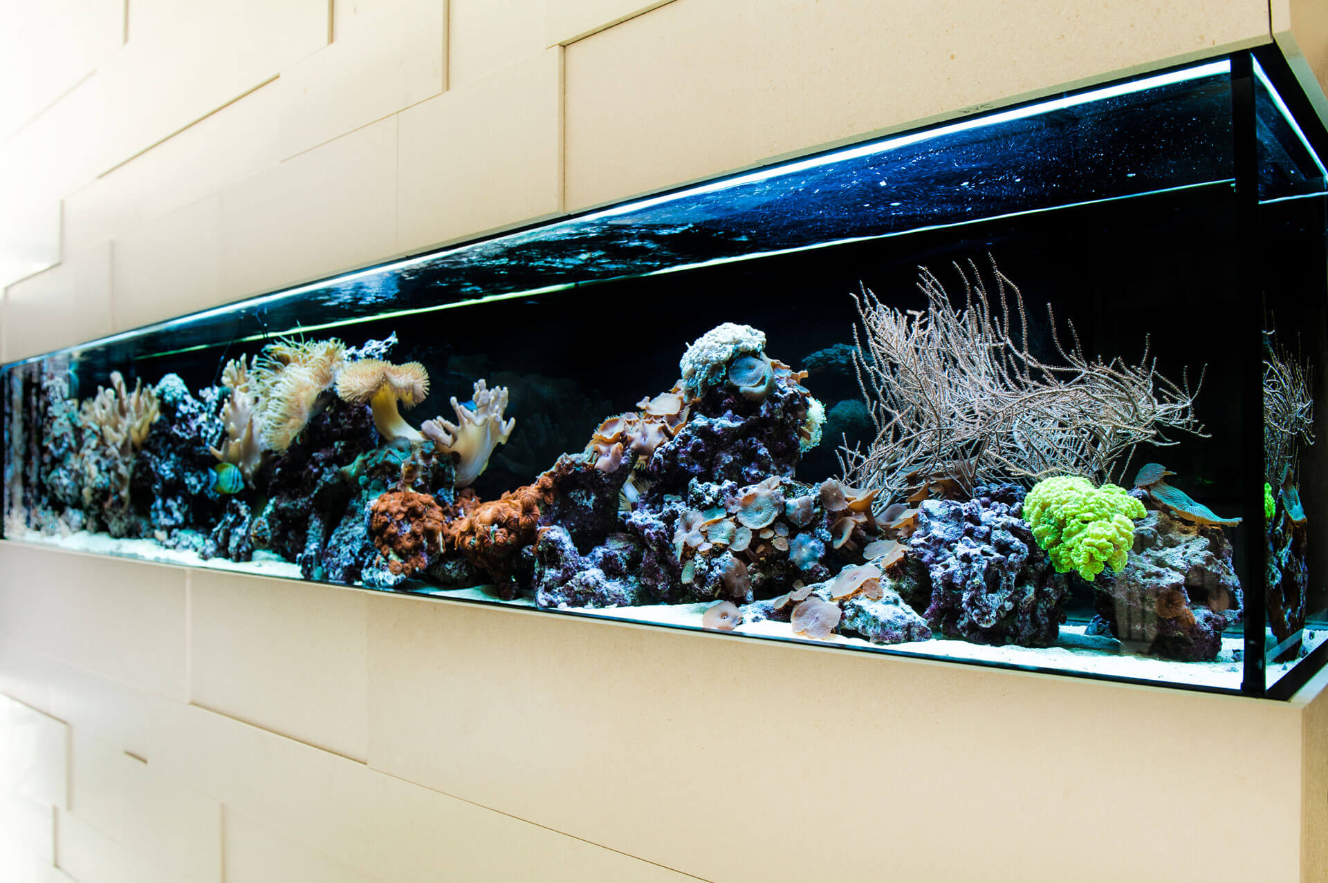 das aquarium als raumteiler