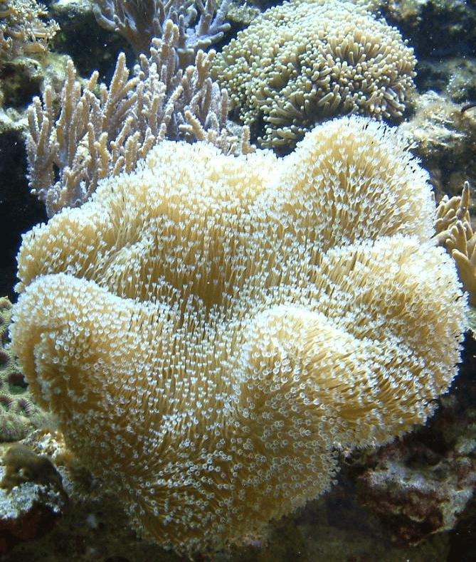 Einlaufphase anlagen im meerwasseraquarium ist ein for Fadenalgen entfernen