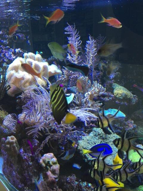 Besatz Meerwasserfische