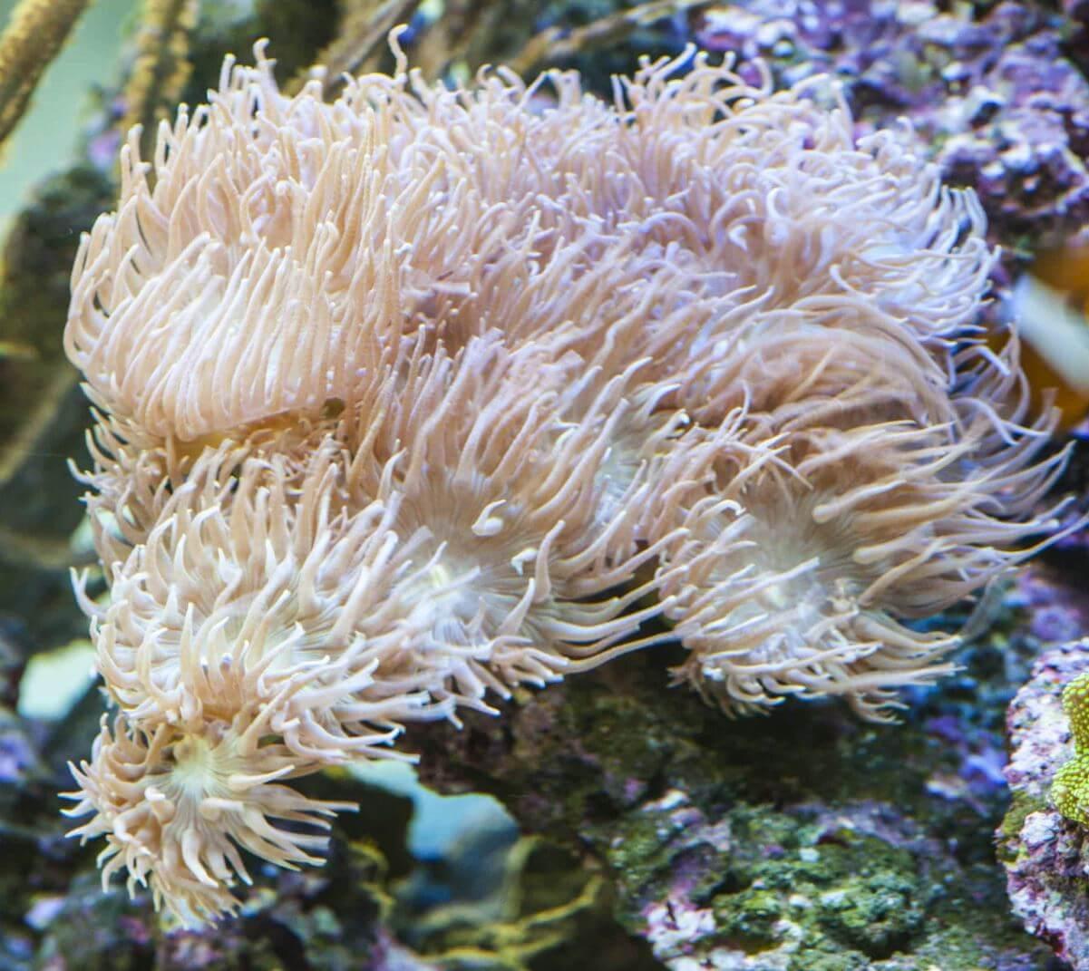 korallen kaufen meerwasser