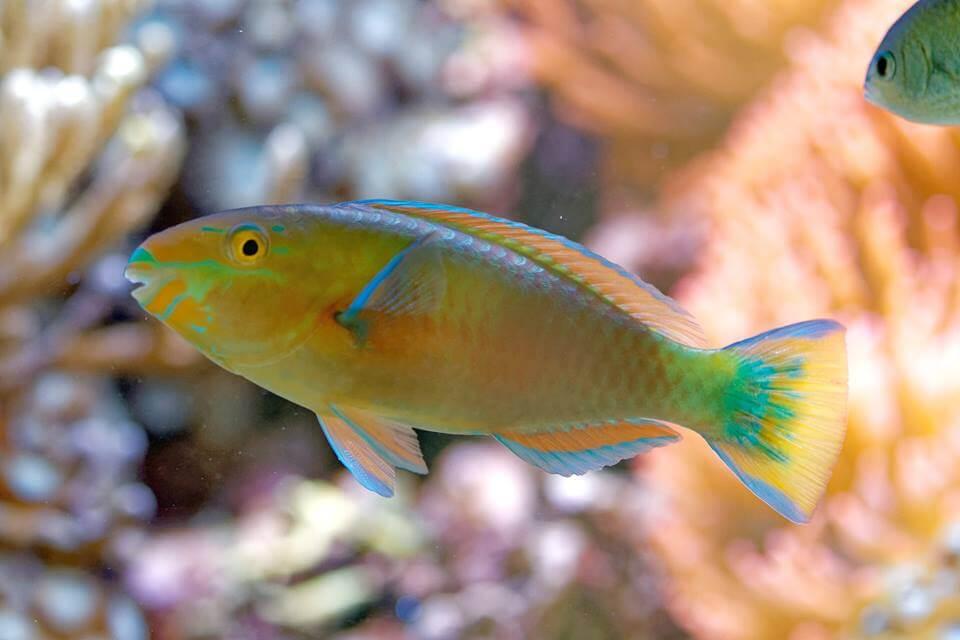 Temperatur im Meerwasseraquarium
