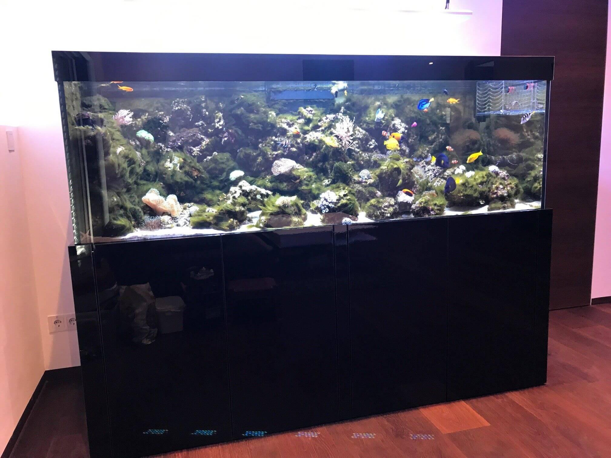 fadenalgen im meerwasseraquarium sind eine sehr l stige plage mit der rictigen strategie lassen. Black Bedroom Furniture Sets. Home Design Ideas