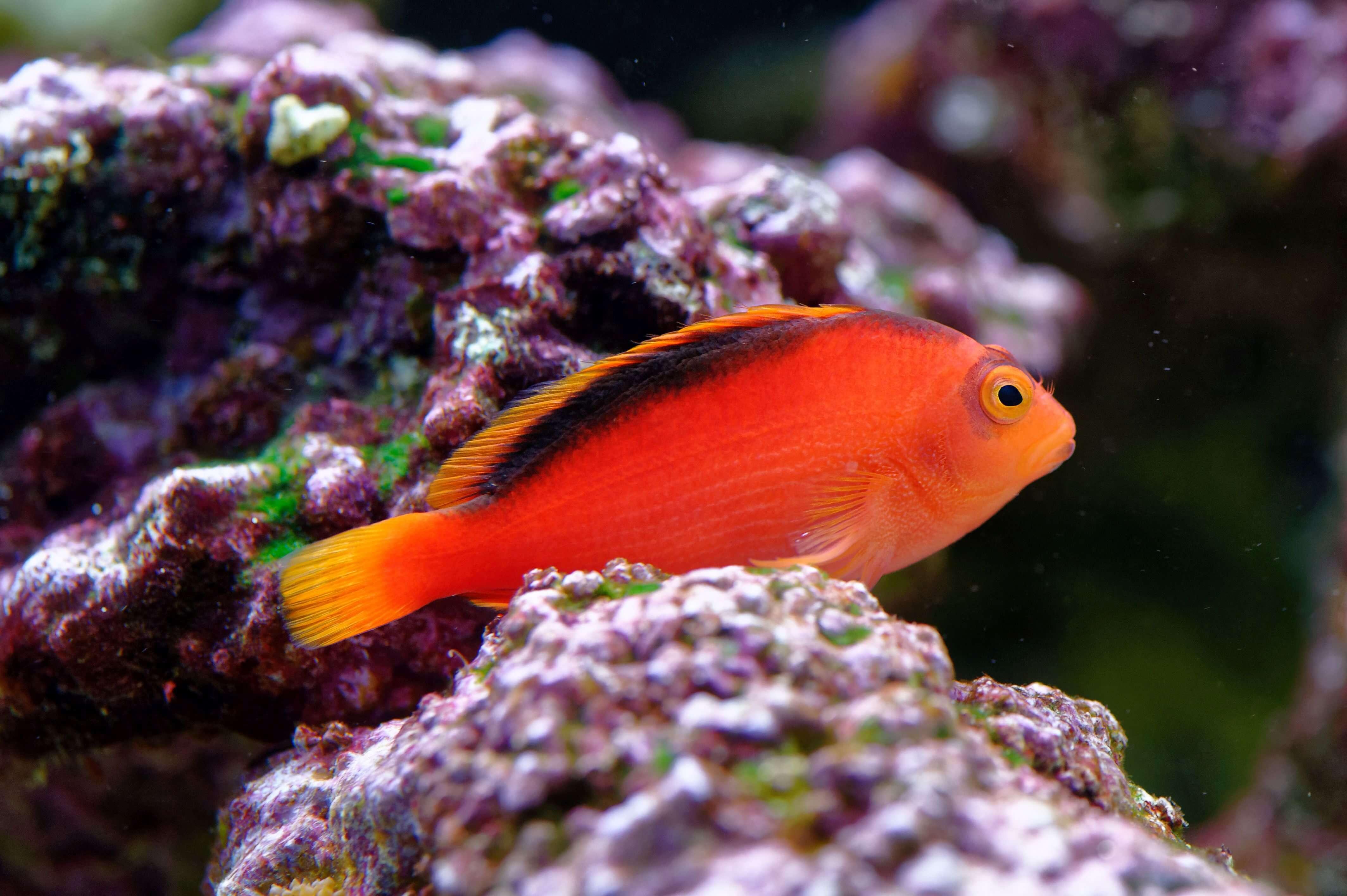 fische aquarium krankheiten