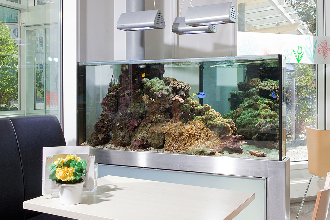 Kinderklinik Salzwasseraquarium
