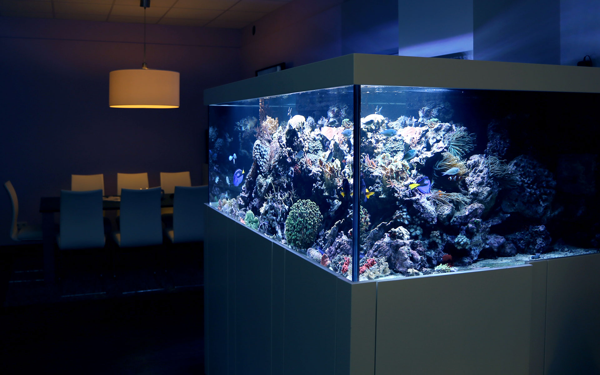Designmöbel von Aquarium West