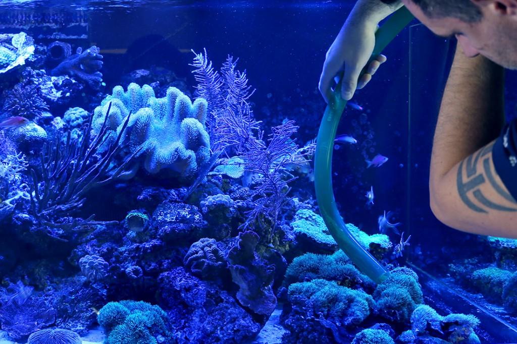 Wasserwechsel Meerwasseraquarium mit Schlauch