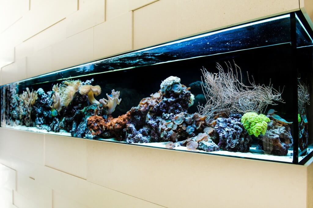 Aquarium München Schauaquarium