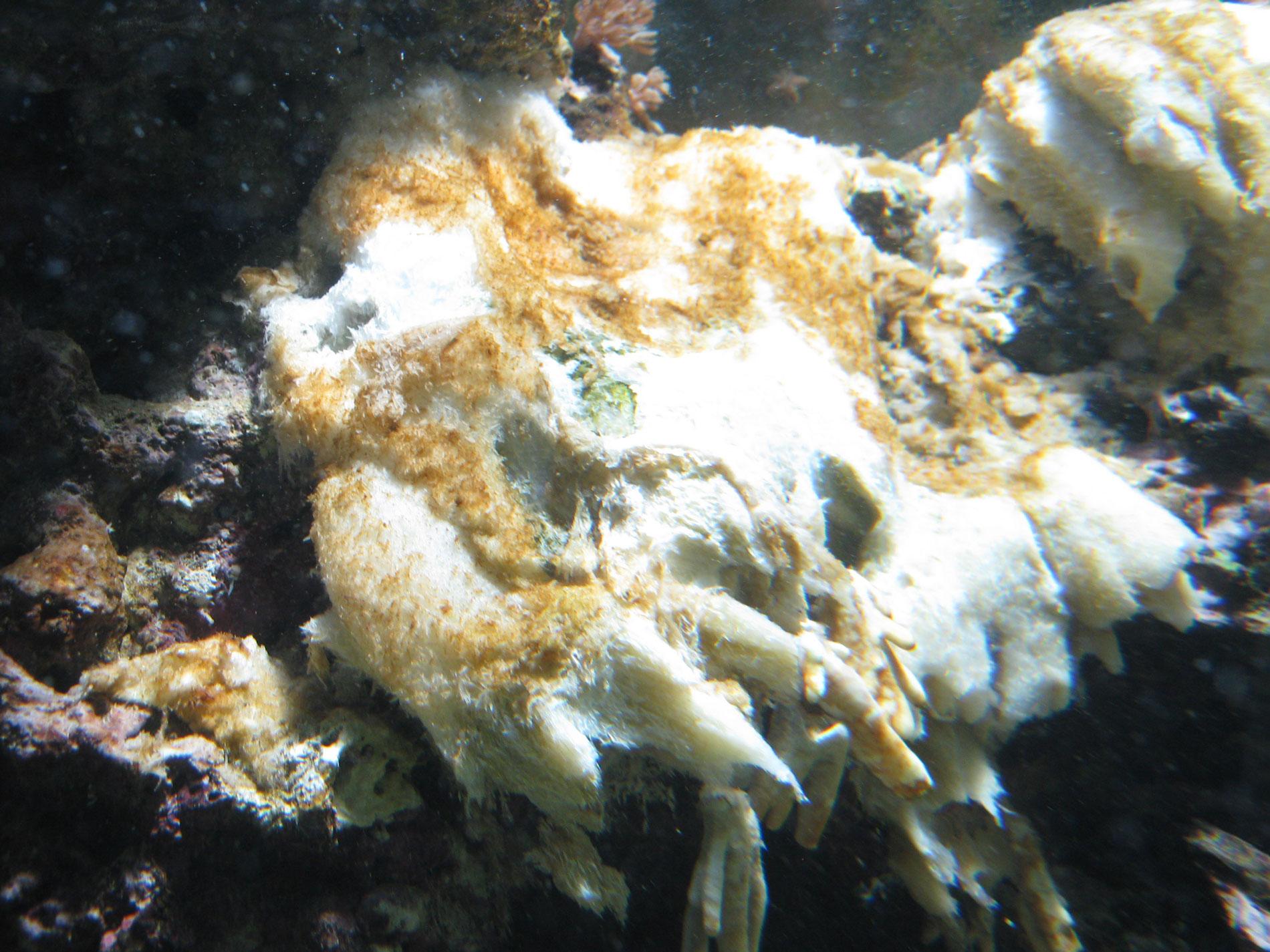 absterbende Koralle beeinflusst den pH-Wert im Meerwasseraquarium