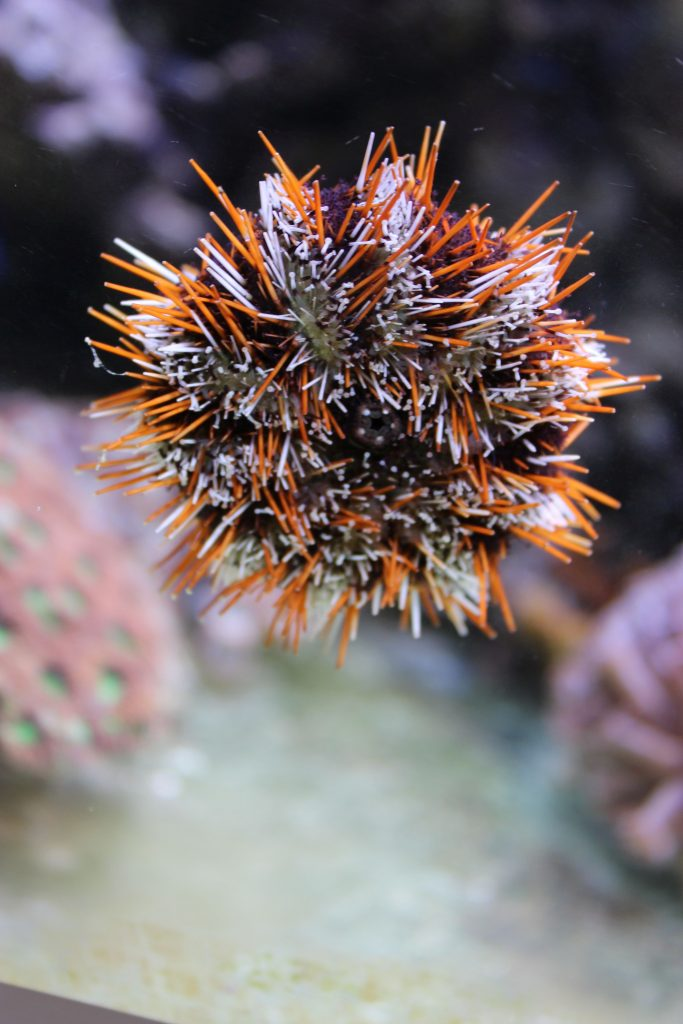 Meerwasseraquarium und Strom