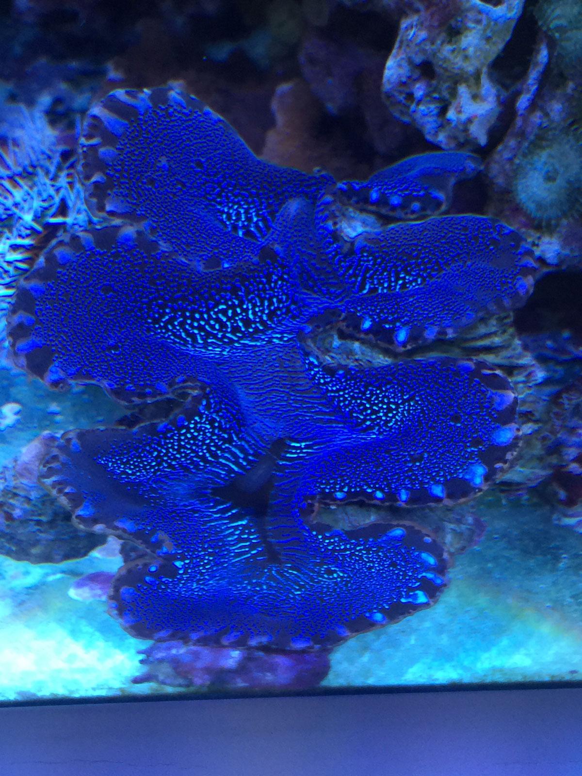 Planton Meerwasseraquarium