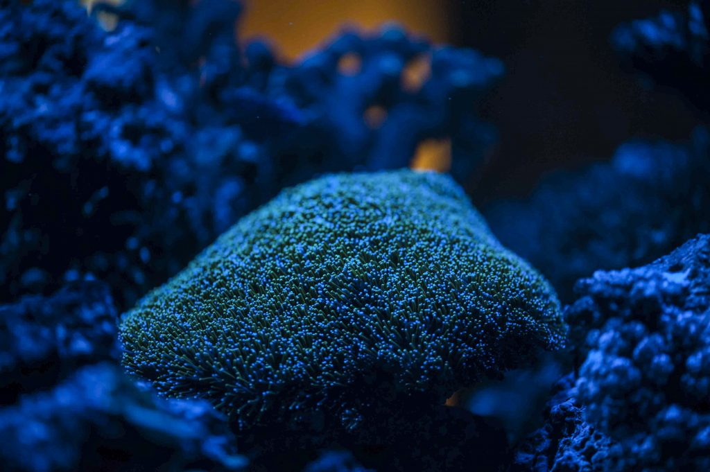 giftige Tiere im Meerwasseraquarium