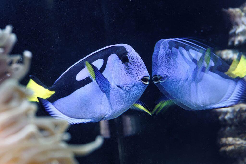 Palettendokor Meerwasserfische