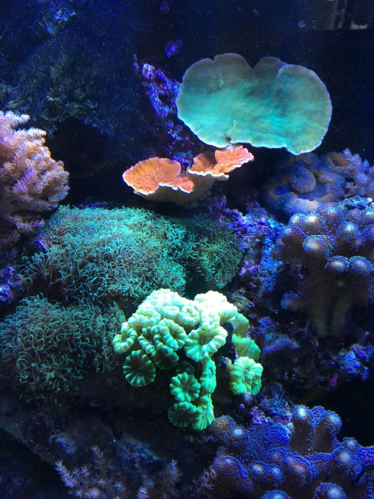 Meerwasser und Dosierpumpen