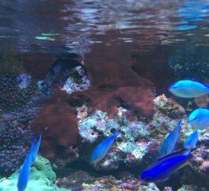 rote Schmieralgen (Cyanos) im Meerwasseraquarium vermeiden