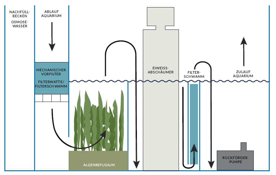 Alegnrefugium als Filter im Meerwasseraquarium