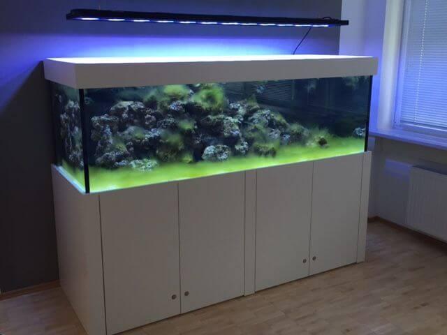 Fadenalgen Einlaufphase Meerwasseraquarium