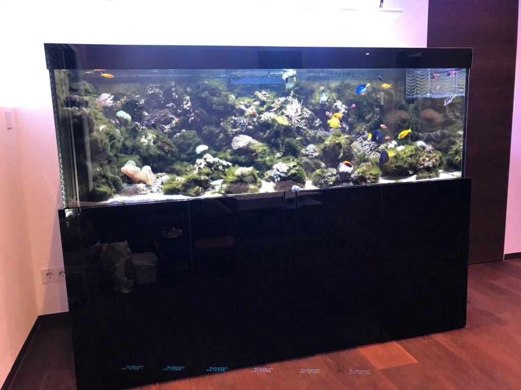 Fadenalgen Meerwasseraquarium
