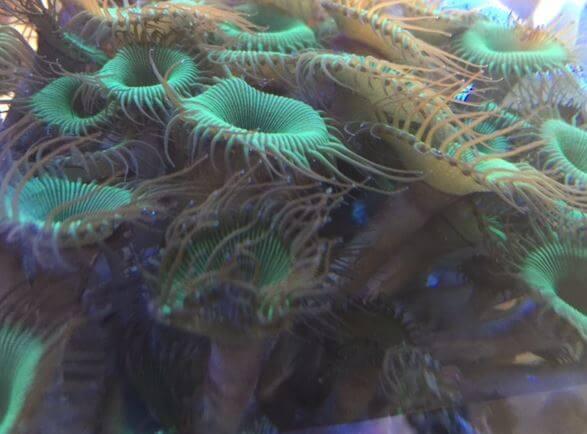 Meerwasseraquarium und giftige Tiere