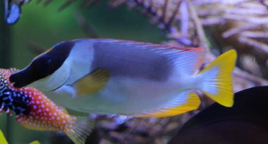 Meerwasseraquarium und giftige Fische