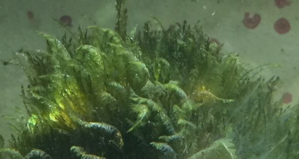 Aquarium München Algen