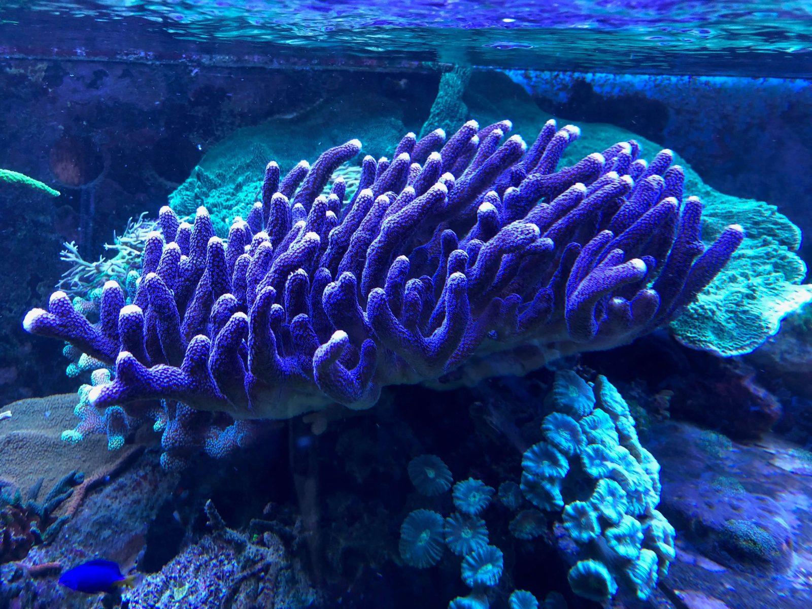 Aminosäuren Meerwasseraquarium