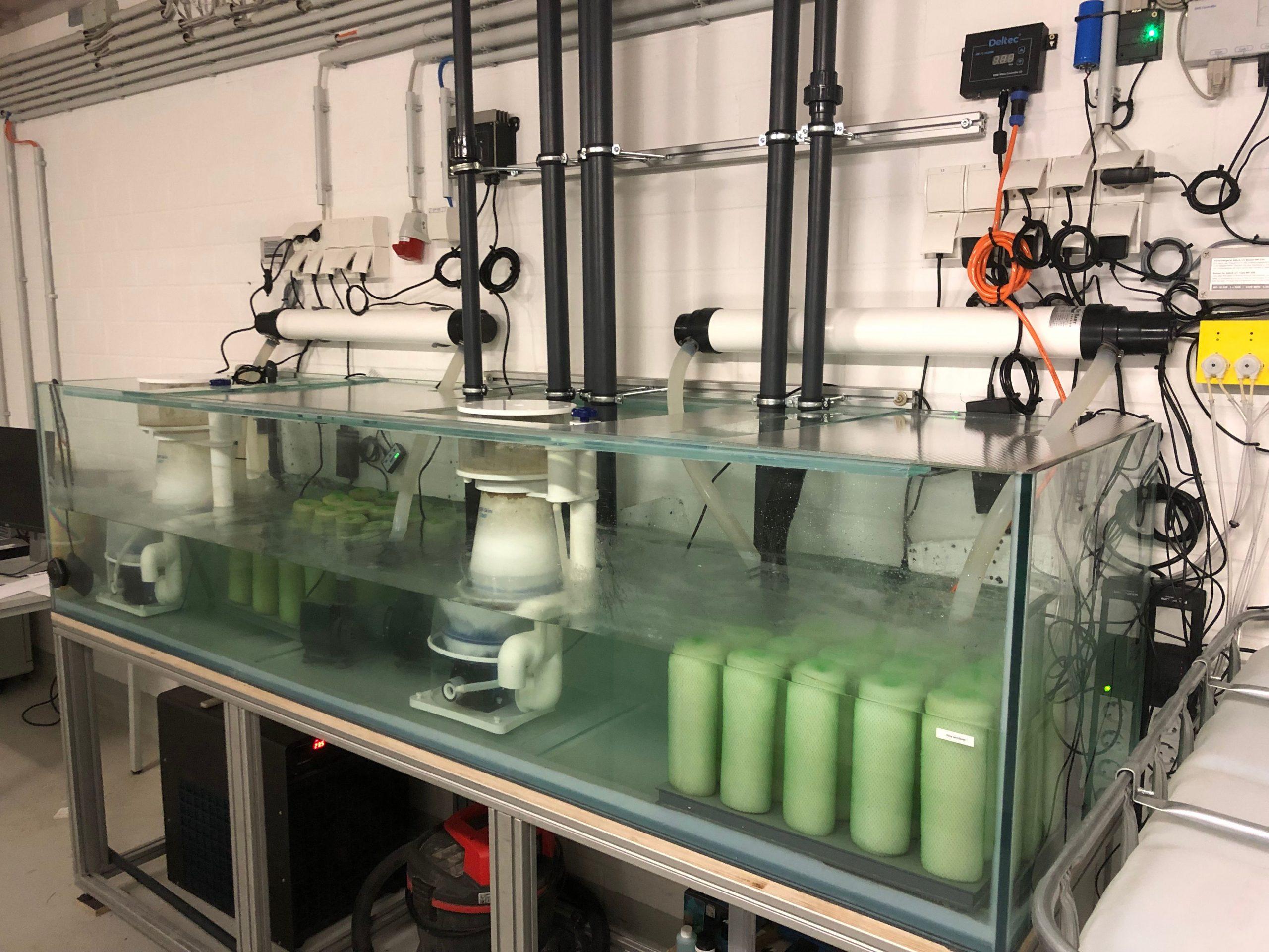 Aquarientechnik Meerwasseraquarium