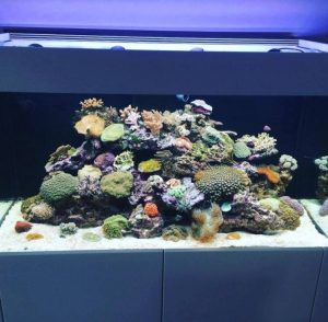Stromkosten Meerwasseraquarium